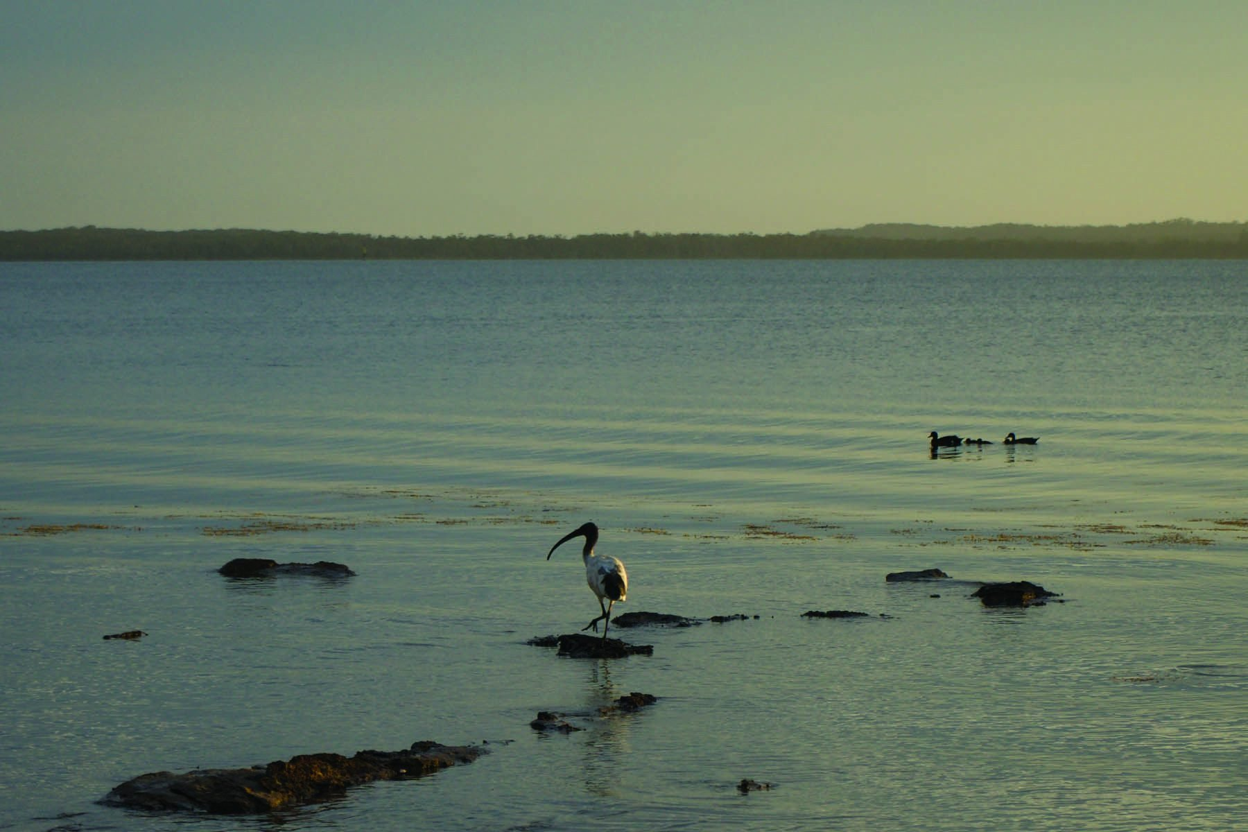 Poise ~ Southern NSW, Australia