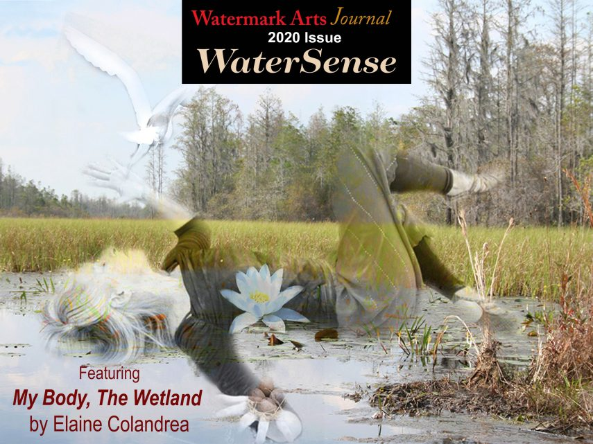 Like Venus come ashore, WATERSENSE, the new 2020 Journal is here!